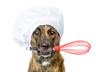 dog in chef's hat holding a wire whisk in mouth. isolated on whi
