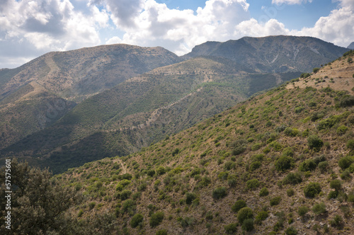 Mediterranean forest in Grazalema Natural Park, Andalusia, Spain