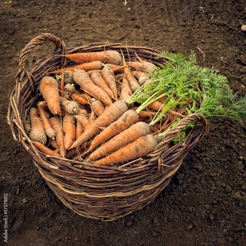 Basket of carrots.
