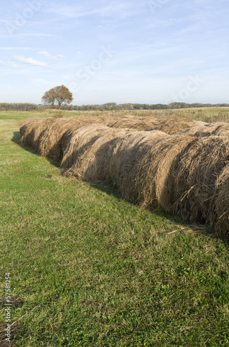 Rolled hay bales in the dunes.