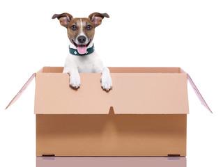 moving box dog