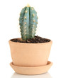 Beautiful cactus in flowerpot, isolated on white