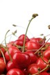 Red Sweet Cherries on White Background with Copy Space