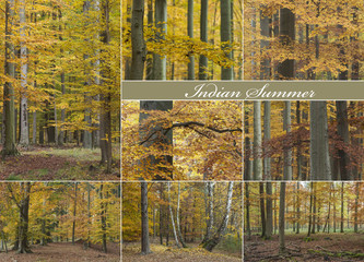 Herbstwald Collage