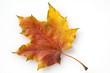 canvas print picture - Ahornblatt im herbst,
