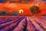 Fotoroleta Lavender fields