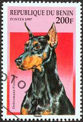 Dobermann pinscher (Benin 1997)
