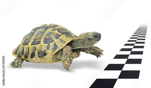 Foto op Plexiglas Schildpad Mit Ausdauer das Ziel erreichen