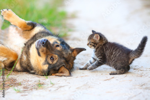 Little kitten playing with big dog
