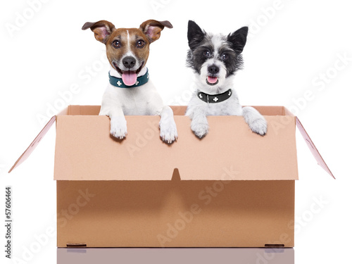 two mail dogs