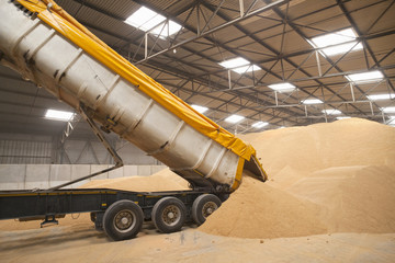 Truck unloading wheat grain in warehouse
