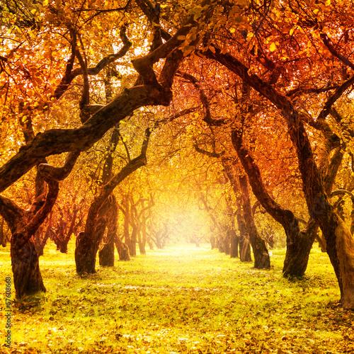 Panel Szklany Autumn. Fall. Autumnal Park