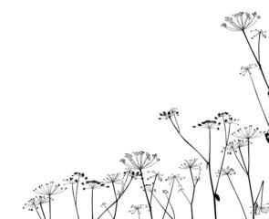dry autumn plants half frame on white