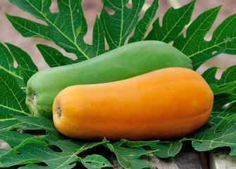 Yellow papaya in the garden