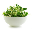 green young sunflower sprouts in the bowl  isolated on white bac