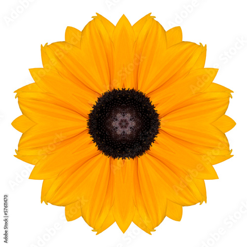 Yellow Marigold Mandala Flower Kaleidoscope Isolated on White
