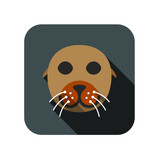 animal ui flat design