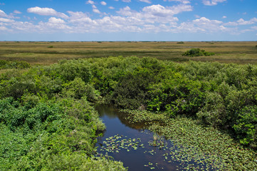 Florida Everglades View