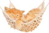 Cute red haired kitten sleeping in hammock - 57621484