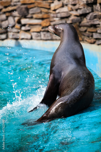 Sea Lion.  Seal