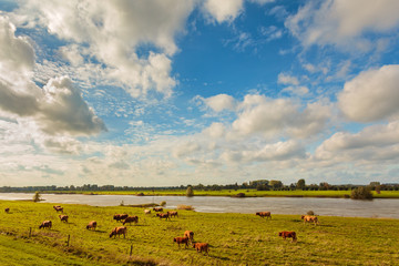 Farmland alongside the Dutch river IJssel