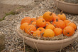 Pumpkins celebration