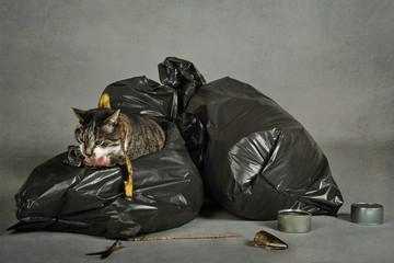 chat errant fouillant les poubelles