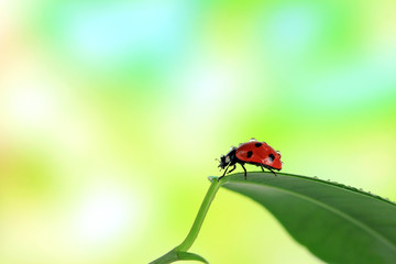 Beautiful ladybird on green leaf