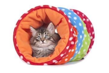 Kätzchen im Spieltunnel