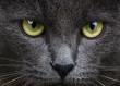 obraz - Close up portrait ...