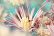 macro shot of gently pink flower
