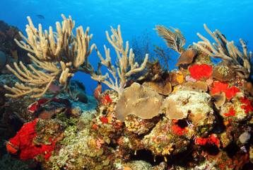 Colorful Corals against Blue Water, Cozumel, Mexico