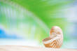 nautilus shell  with palm leaf , beach and seascape, shallow dof