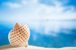 nice seashell  with ocean , beach and seascape, shallow dof