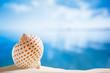 nice seashell  with ocean , beach and seascape, shallow dof