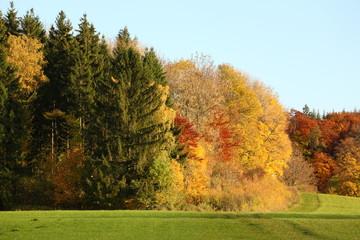 Herbstwaldrand