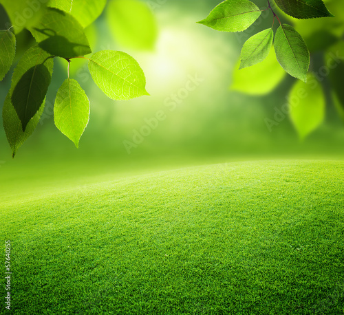 Spring forest  background