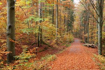 Herbstlicher Waldweg im Schönbuch