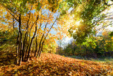 Autumn, fall in forest. Sun shining through colorful leaves