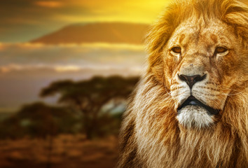 Lion portrait on savanna background and Mount Kilimanjaro © Photocreo Bednarek