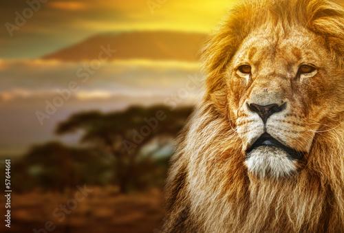 Poster Lion portrait on savanna background and Mount Kilimanjaro