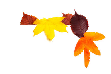 Various autumn leaves isolated on white