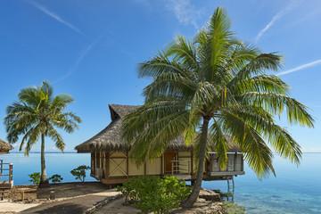 Französisch-Polynesien-Moorea-6578