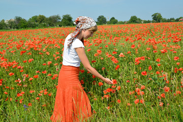 The young woman admires the poppies growing in a field