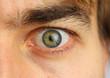 human eye and eyebrow close-up