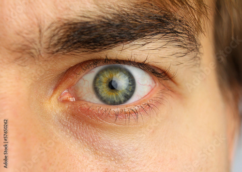 human eye and eyebrow close-up