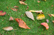 Colorful autumn leaves on the grass