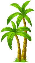 Deux palmiers