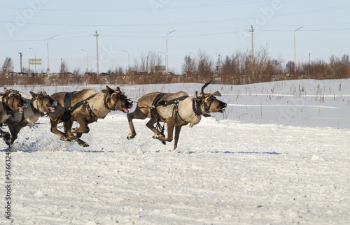 flying reindeers