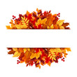 Autumn leaves background. Vector illustration.